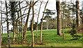 J3975 : Fields and trees, Glenmachan, Belfast - February 2014(1) by Albert Bridge