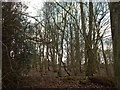 TL9838 : Woodland in Polstead by Hamish Griffin