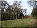 SE2712 : Clearing in Bridge Royd Wood by Christine Johnstone