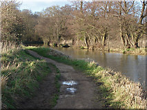 SU9947 : Canal banks by Alan Hunt
