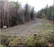 J3630 : Line of the HEP pipeline through Donard Wood by Eric Jones
