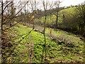 SX7557 : Young trees near Higher Beenleigh by Derek Harper