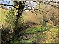 SX7557 : Stream south of Larcombe by Derek Harper