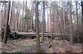 J3629 : Uprooted trees in Donard Wood by Eric Jones