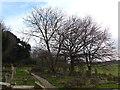 TQ3864 : Walking round St John the Baptist West Wickham (8) by Basher Eyre