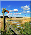 TA2271 : Footpath Waymarker by Scott Robinson