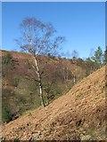 SE8791 : Dovedale Griff by Gordon Hatton