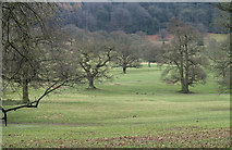 SK2571 : Chatsworth Park by Trevor Littlewood