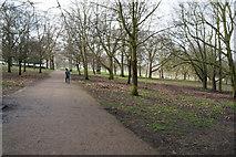 TQ3187 : Capital Ring at Finsbury Park by Ian S