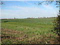 TM1096 : Oilseed rape crop by Evelyn Simak