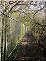 ST5982 : Community Forest Path at The Tumps by Derek Harper