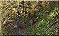 J3977 : Path, Redburn, Holywood - March 2014(2) by Albert Bridge