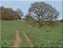 TQ0147 : Tracks near the Chantries by Alan Hunt