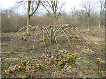 TM1497 : Ash-art in Lower Wood Nature Reserve by Evelyn Simak