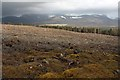 NN8299 : Forestry clear fell, Creag Dhubh by Dorothy Carse