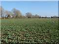 SP4812 : Arable farming by Alan Hunt
