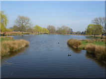 TQ1669 : Leg of Mutton Pond, Bushy Park from the London LOOP by Marathon