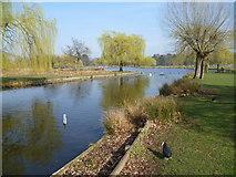 TQ1669 : Looking towards Heron Pond, Bushy Park by Marathon