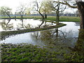 TQ1470 : Hampton Hill Pond, Bushy Park by Marathon