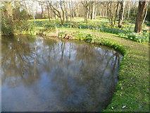 TQ1469 : Silver Birch Glade in the Waterhouse Woodland Garden, Bushy Park by Marathon