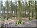 SE2144 : Chevin Forest Park [7] by Christine Johnstone