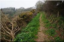 SX6746 : Avon Estuary Walk by jeff collins