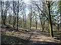 SE2144 : Chevin Forest Park [16] by Christine Johnstone