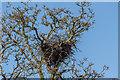 TQ3643 : Heron's Nest, British Wildlife Centre, Lingfield, Surrey by Christine Matthews