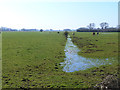 SP9197 : Ditch on the Welland floodplain by Oliver Dixon
