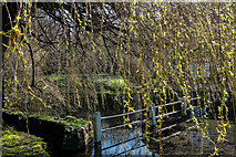ST6601 : The Duck Pond, Cerne Abbas by Roger May