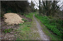 SX5646 : Coast Path to Mothercombe by jeff collins