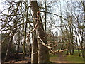 TM1644 : Sticky bud in Christchurch Park by Hamish Griffin