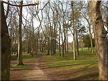 TM1644 : Avenue of Horse Chestnut trees in Christchurch Park by Hamish Griffin