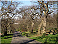 TQ3877 : Path in Greenwich Park by Stephen Craven