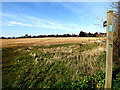 TM4461 : Footpath to Golding's Lane by Geographer