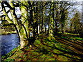 H4772 : Mossy riverbank, Cranny by Kenneth  Allen