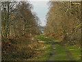SN6795 : Track through woodland, Penrhyn Mawr by Nigel Brown