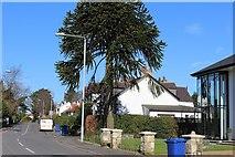 NS4371 : Old Greenock Road, Bishopton by Leslie Barrie