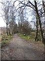 NZ1657 : Derwent Path at Rowlands Gill by Oliver Dixon