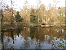 TM1645 : Pond in Christchurch Park by Hamish Griffin