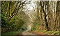 J4268 : The Ballyalloly Road near Comber - March 2014 (2) by Albert Bridge