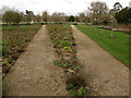SP5205 : Oxford Botanic Garden: diverging paths by Stephen Craven