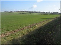 SU5751 : Fields north of Andover Road by Given Up