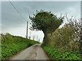 SU5921 : Lone Barn Lane by Robin Webster