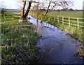 SU4673 : Winterbourne Stream near Chieveley by Des Blenkinsopp