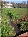 SX9363 : Ilsham Valley Stream by Derek Harper