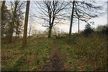 SK1342 : Path through the woods near Norbury by Bill Boaden