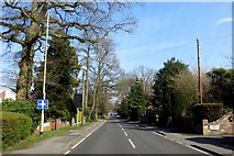 SU8064 : Nine Mile Ride in Finchampstead by Steve Daniels