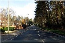 SU8265 : Nine Mile Ride in Heathlands by Steve Daniels
