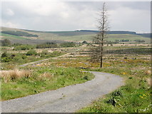 SN0729 : A Cleared Corner of Pantmaenog Forest by Tony Atkin